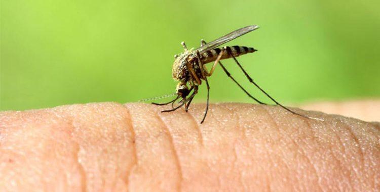 Os mosquitos costumam incomodar em nossa ida à praia, mas existem meios de se prevenir disso