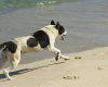 Cinco cuidados essenciais com seus animais em praias