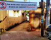 Prefeitura de São Sebastião reforça fiscalização em comércios para cumprimento de quarentena